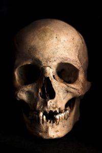 skull, human, head